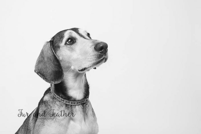 Fun Commission with the gorgeous dog, a Heinz 57 called Eva.