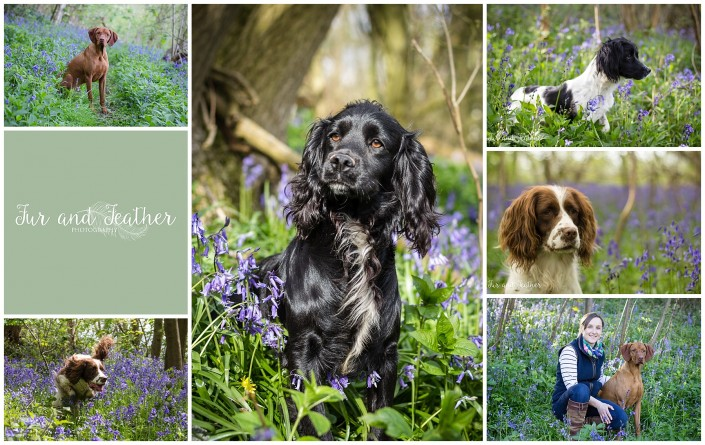 Gloucestershire Bluebell Sessions available to Book Now